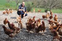 élevage poules bio
