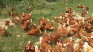 achat d'œufs bio