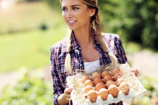 Aviculture œufs BIO